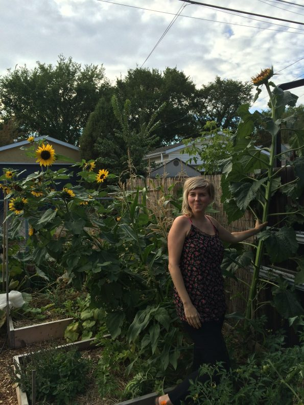 Sunflowers in Herb Garden 2015