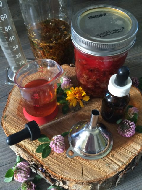 Oils, Infused oils, herbal oils, salves, balms, herbalism, plant medicine